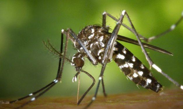 F3DH démoustication. La solution face au fléau des moustiques tigres